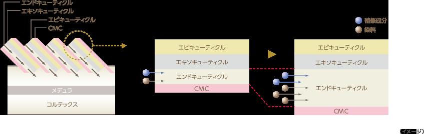 水膨潤システムイメージ